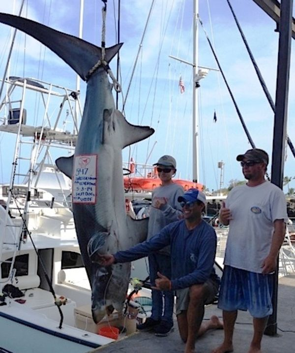 547-POUND, 6-OUNCE THRESHER SHARK