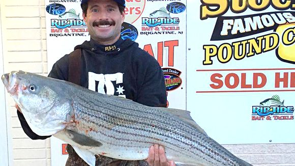 View topic: Bluefish, stripers still keeping SJ anglers busy