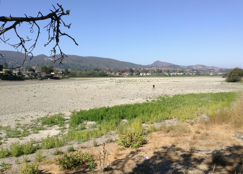 A dried-up Laguna Lake in San Luis Obispo, California, in September 2014, after several years of severe drought. Joyce Cory/Creative Commons