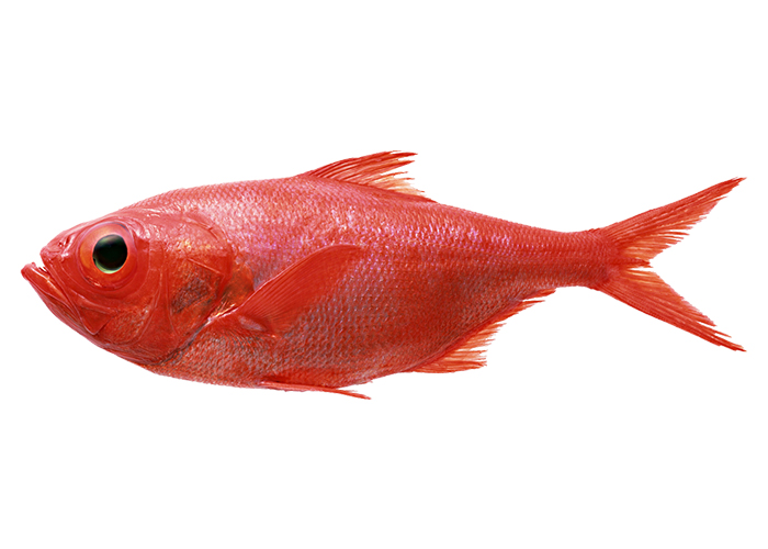 ... of fish is to know what they like. A red fish or red drum likes