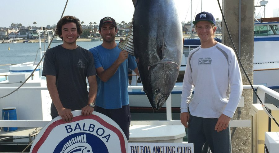 From left: Joseph Aunders, Zach Zorn and Seth DuBois show off a 240.2-pound bluefin tuna Monday at Balboa Angling Club at Newport Marina in Newport Beach. They hooked into the fish 50 miles west of San Diego and fought it for eight and a half hours