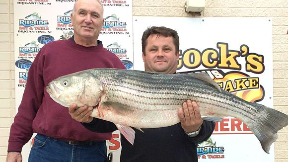 "Wieslaw Czajka caught his first striper fishing on his friends 14' boat in the back bays of Brigantine, NJ. It was 40"" and weighed 23 lbs. The back bays continue to give up nice bass. 11/18/15. (Photo: Riptide Bait and Tackle, Brigantine NJ)"