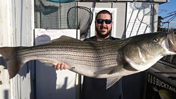 Chris DeVito was drifting eels down the I.C.W. and latched on to the fight of his life. Almost 38 pounds of muscle. Looks like at least some of the cows are taking the inland route south. (Photo: Absecon Bay Sportsman Center www.abseconbay.com)Chris DeVit